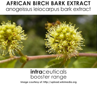 African Birch Bark Extract